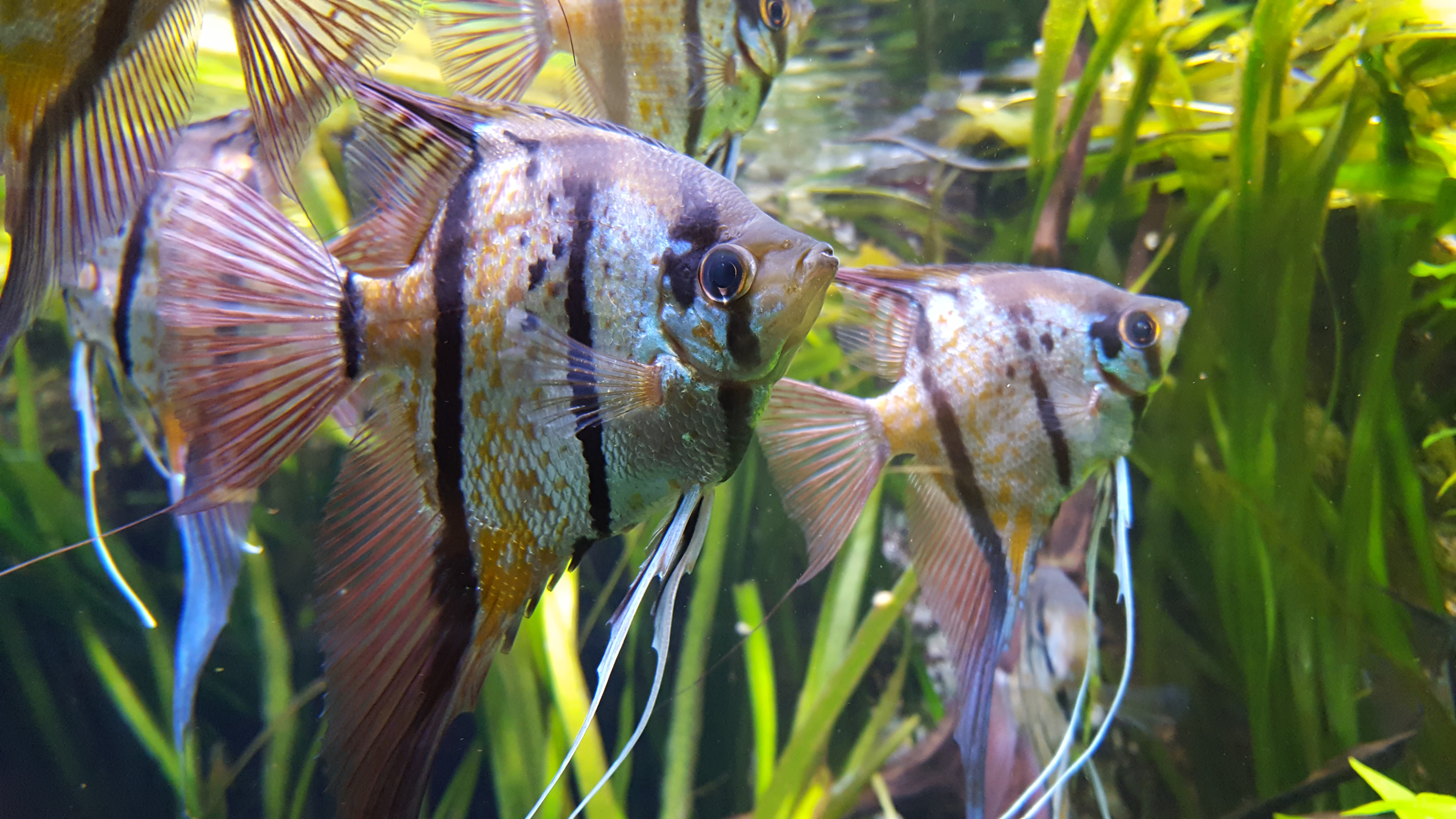 L'aquarium de la Porte Dorée