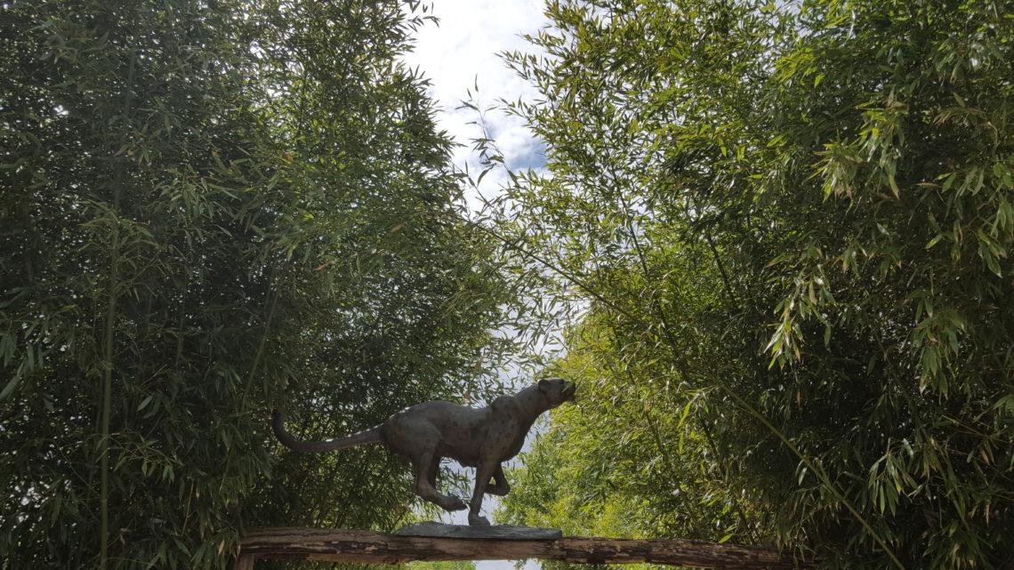 Parc des Félins de Lumigny
